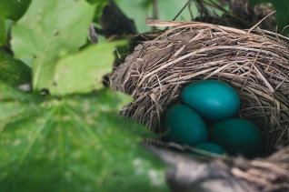 pixabay free image - nest with egg