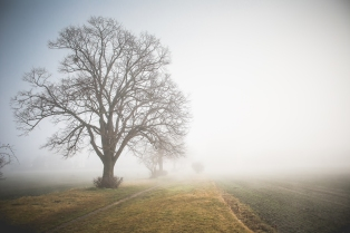 picjumbo free image - foggy path.jpg